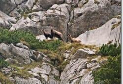 allgaeuer-alpen-oktober-2009-082