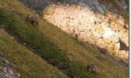 allgaeuer-alpen-oktober-2009-186