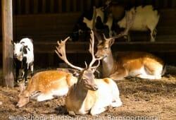 Antholzertal - Tiergehege am Antholzer See