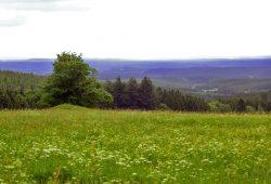 Campingplatz Harz-Camping - Schierker Wiesen