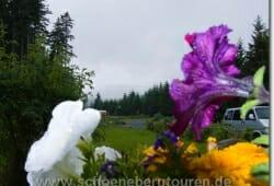 schierke-juni-2009-134