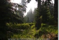 schierke-mai-2009-050