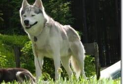 schierke-mai-2009-115