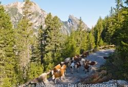 Hochpustertal / Sextener Dolomiten / Pragser Dolomiten - Almabtrieb