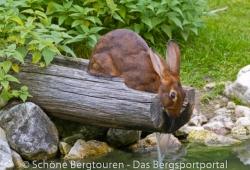 Hochpustertal / Sextener Dolomiten / Pragser Dolomiten - Bunnypower