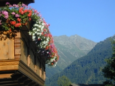 Hotel Jaegerhof - Balkonblumen