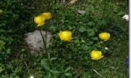 Blumen im Falzthurntal