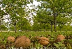 Limousin - Walnussplantage Les Vergers de Coquart