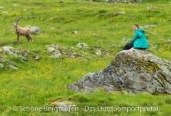 Marmot Starfire Jacket - Steinbock
