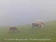 Meraner Land - Schafe im Nebel