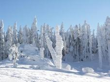 Haidmuehle - Winterlandschaft