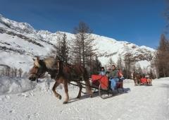 Pfelders - Schlittenfahrt