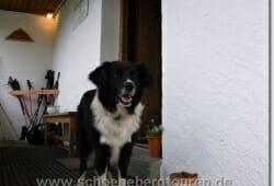 stubaitaler-hoehenweg-juli-2008-105