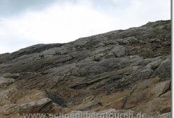 Steinboecke am Col des Fours