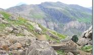 Ein gruener Hinkelstein zwischen den Felsen