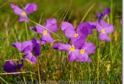 Wer kennt den Namen der Blume?