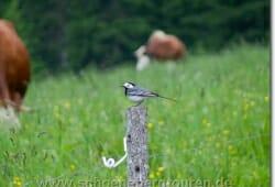 Wer kann sagen was das für ein Vogel ist?
