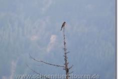 Vogel auf einer Baumspitze