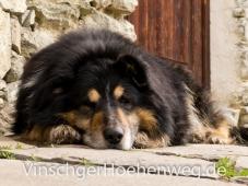 Schlosshund Bobby
