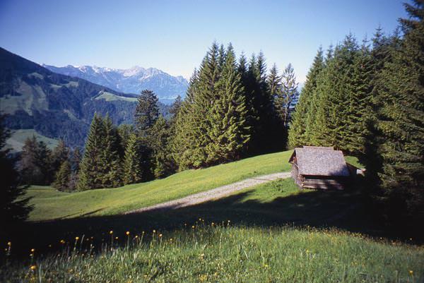 Vier Jahreszeiten Wanderbuch Alpweg - Zwischen Alpwegkopf und Bingadels