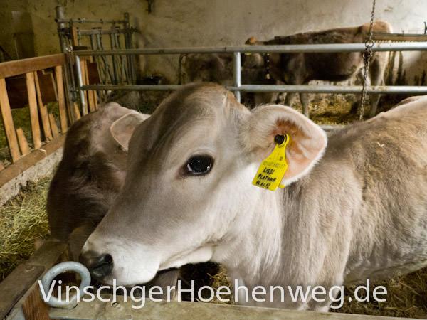 Vinschger Hoehenweg - Hofkaeserei Englhorn