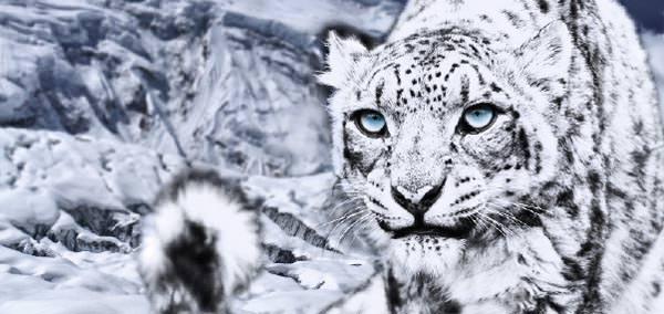 Dynafit - Schneeleopard