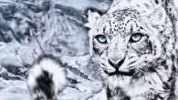 International Snow Leopard Day 2013 – Dynafit setzt sich für die Schneeleoparden ein 1 Meter – 1 Cent – 9 Länder – 12 Stunden Zum vierten Mal ruft der führende […]