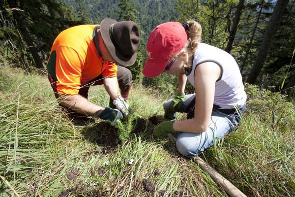 DAV - Aktion Schutzwald