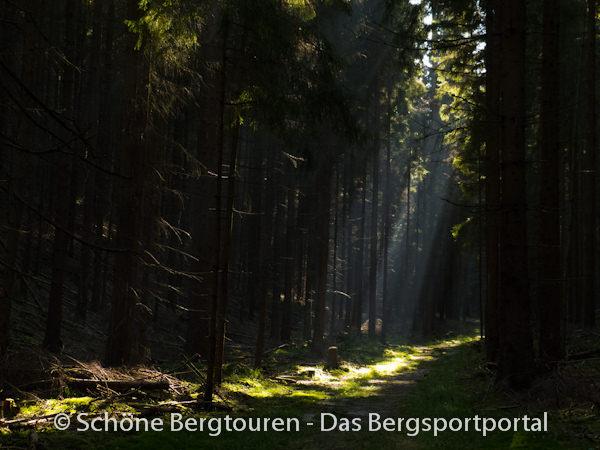 Saechsische Schweiz - Dunkle Waelder