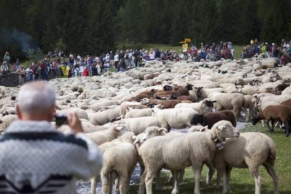 Wallis - Schaeferfest in Leukerbad