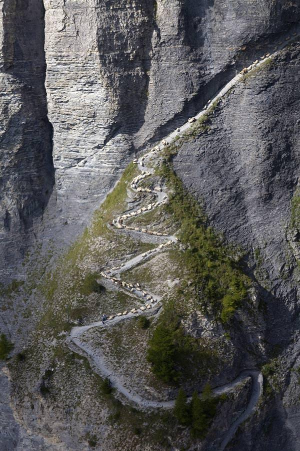 Wallis - Schafabzug in Leukerbad