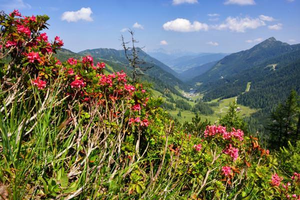 Zauchensee - Blumen im Sommer