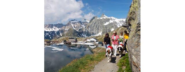 Grosser Sankt Bernhard Pass - Wandern mit Bernhardinern
