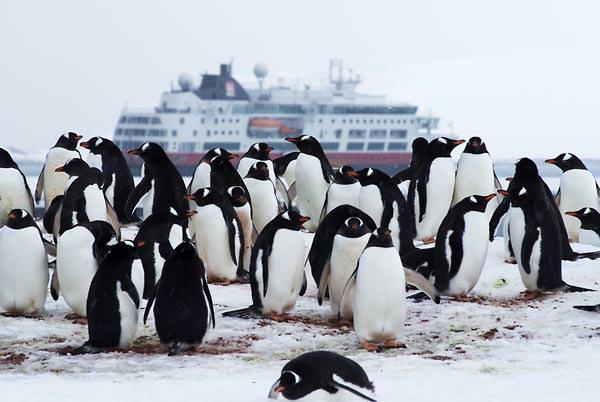 Hurtigruten - Pinguine