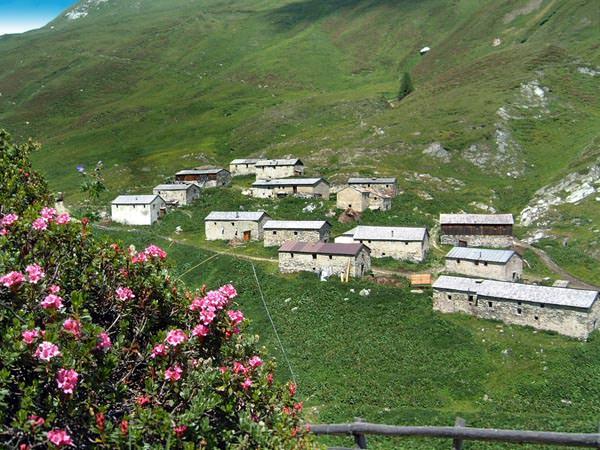 Osttirol - Almrosen an der Jagdhausalm