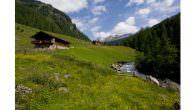 Nationalpark Hohe Tauern Osttirol – Die grünen Riesen aus dem Osttiroler Defereggental… Sie wächst in den höchsten Lagen, trotzt Blitzeinschlägen, kann bis zu 1000 Jahre alt werden und übersteht Temperaturen […]