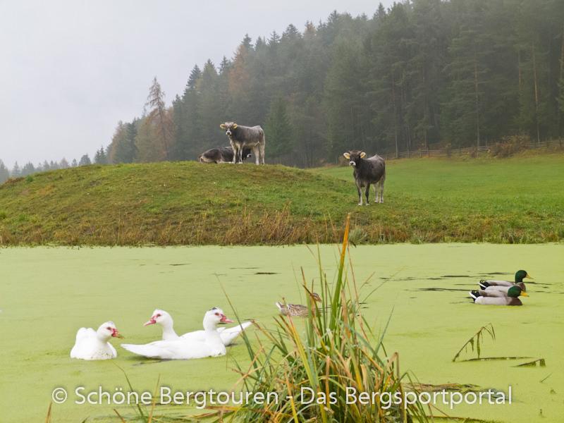 Eggental - Teich am Woelflhof
