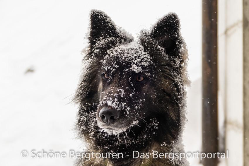 Davos Klosters - Mitglied der Bergrettung