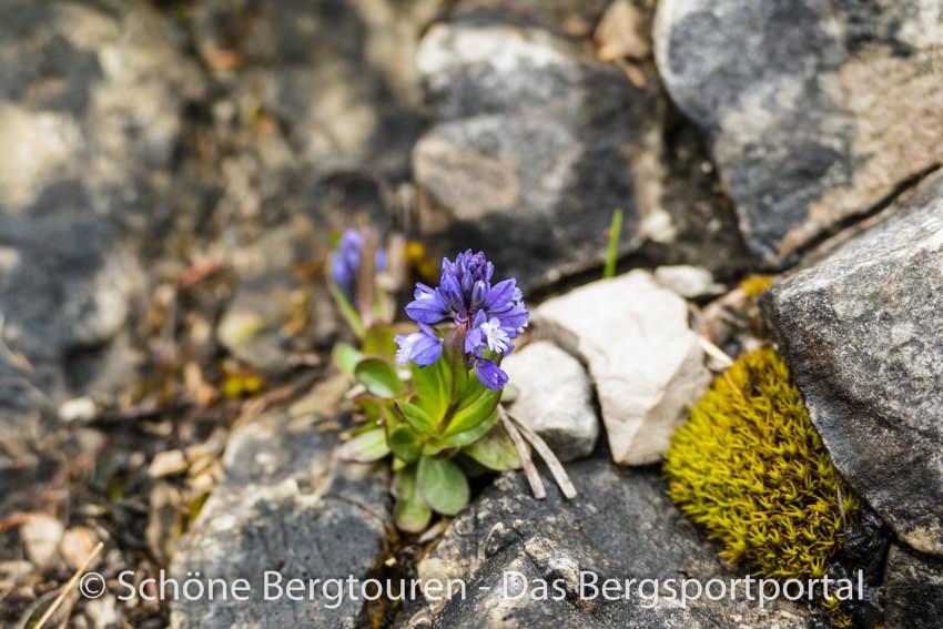Achensee - Blumen