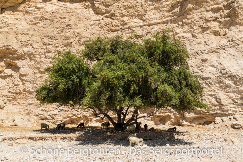 Israel - Baum im Wadi Og