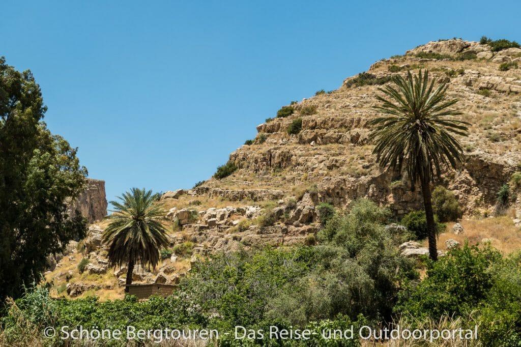 Israel - Oase im Wadi Qelt
