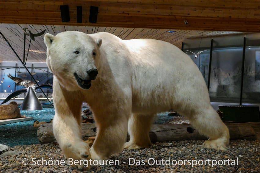 Spitzbergen - Eisbaer im Svalbard Museum
