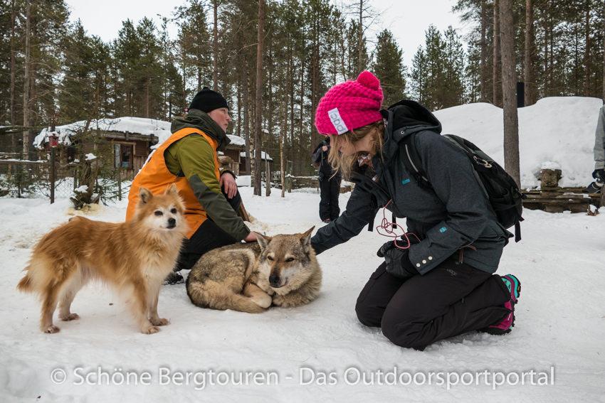 Levi in Lappland - Levi Huskypark