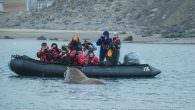 Spitzbergen Expeditionskreuzfahrt– Mondlandschaft, Eisbärenfamilie und Walrossbesuch… Dritter Teil unserer Kreuzfahrt um Spitzbergen Am dritten Tag unserer Spitzbergen Kreuzfahrt mit Fietz Polar Kreuzfahrten hatten wir bis zum Morgen gute Strecke gemacht […]