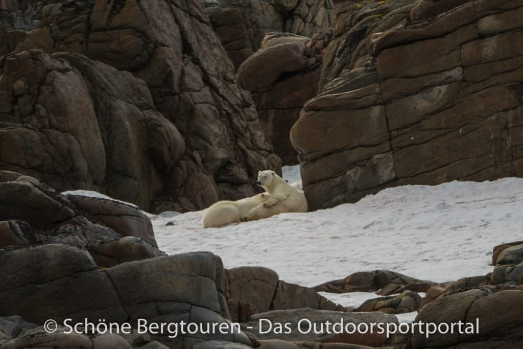 Spitzbergen - Eisbaerenfamilie