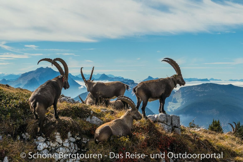 Wandern - Frankreich - Haute-Savoie - Bornes Alpen