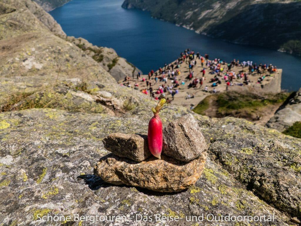 Fjord Norwegen - Radieschen am Preikestolen