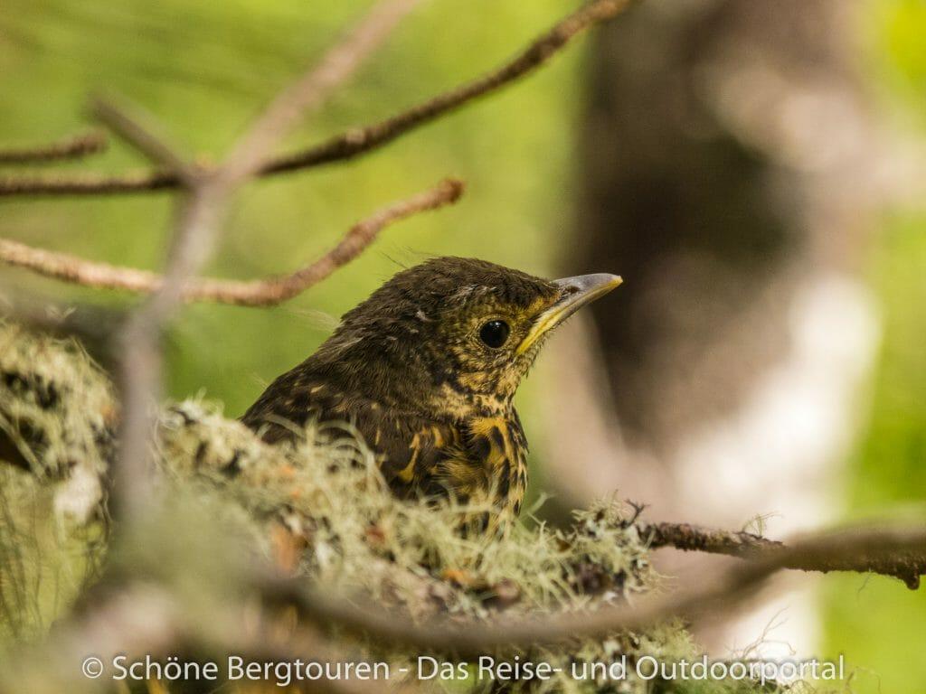 Fjord Norwegen - Vogel im Husedalen