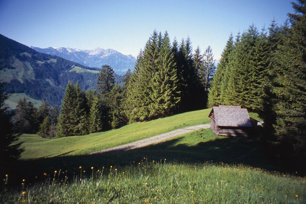 Das Vorarlberger Vier-Jahreszeiten-Wanderbuch - Alpweg