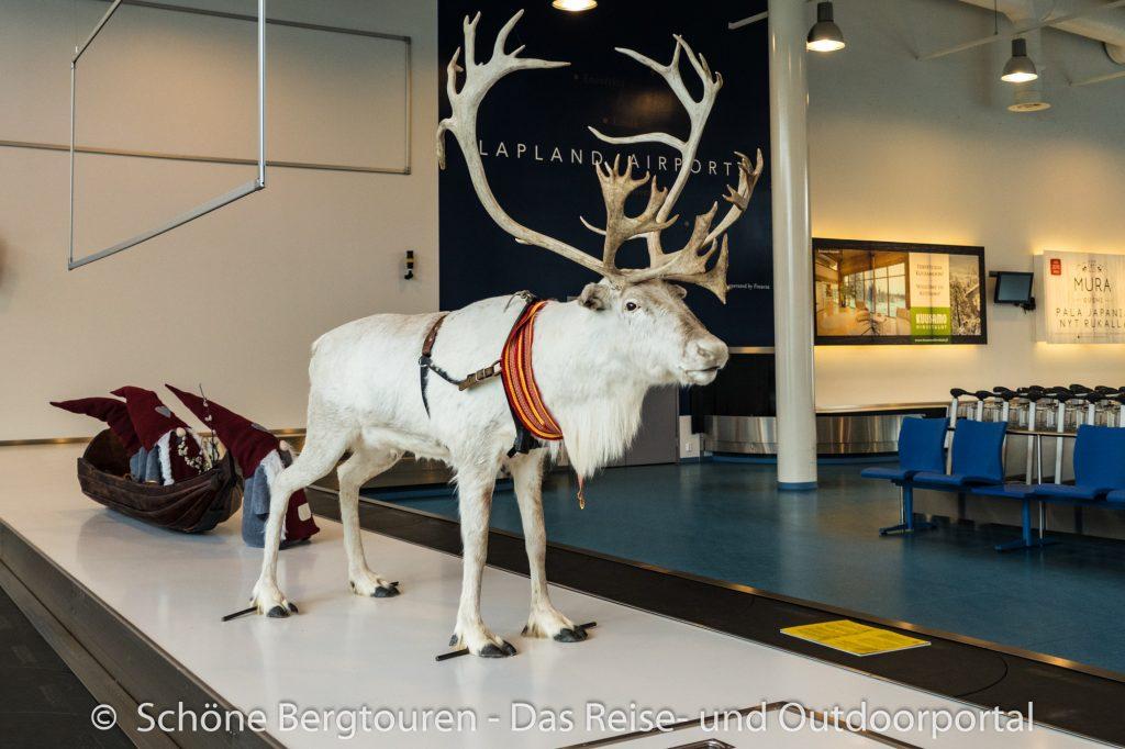 Finnland - Rentier am Flughafen von Kuusamo
